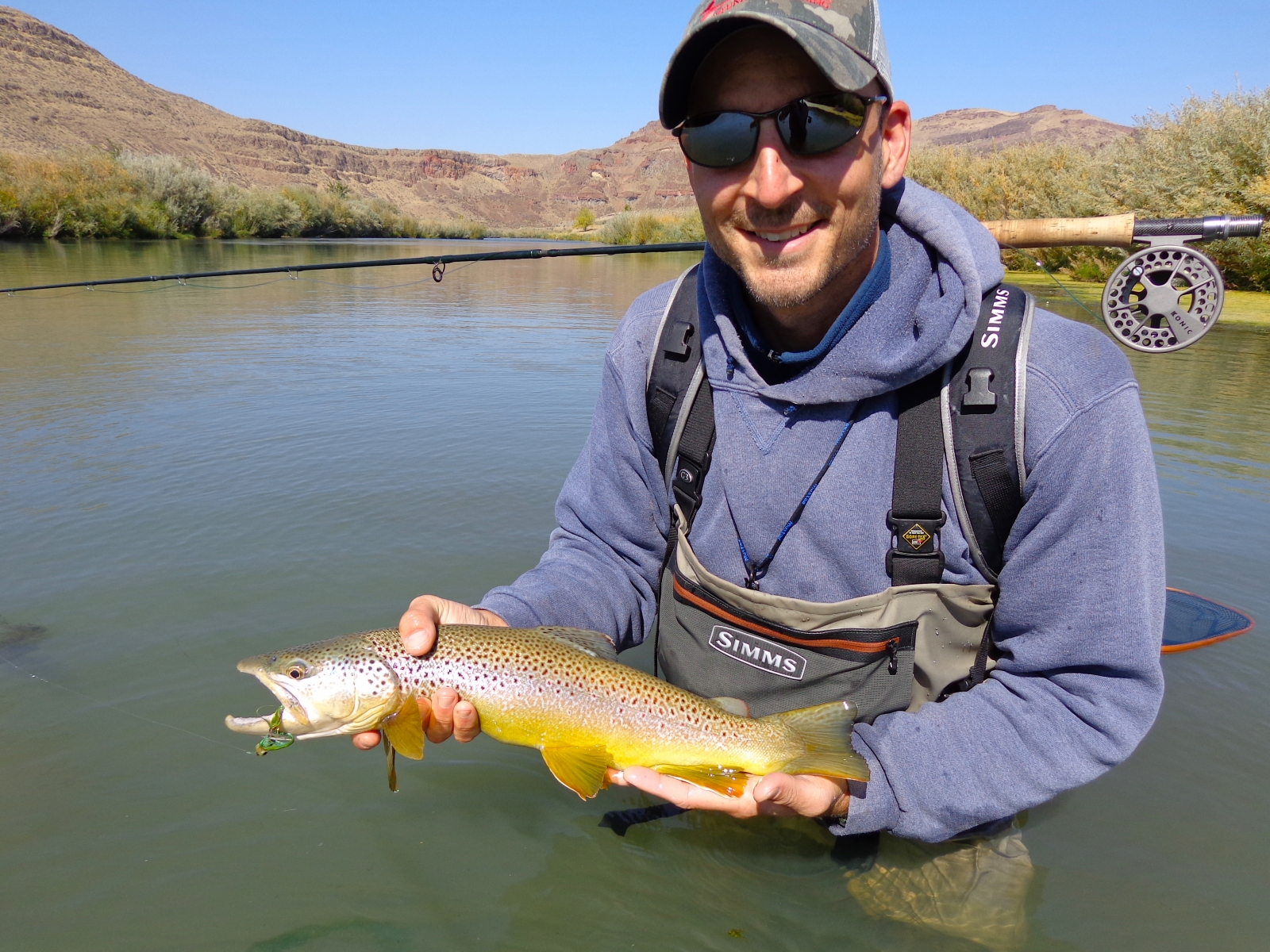 Brown on the Articulated Streamer